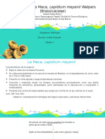 Quince · SlidesCarnival.pptx