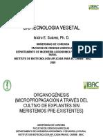 TEMA 6. Organogénesis (1).pdf