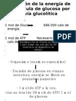 Fisiologia ATP