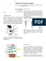 Laboratorio 2 FV .docx