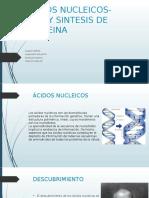 Copia de ACIDOS NUCLEICOS-ARN, Y SINTESIS DE PROTEINA
