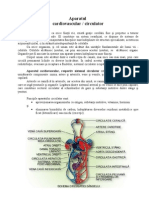 Ref. Anato - Sist Arterial