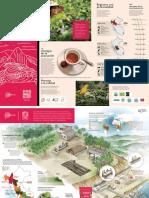 CAFÉ_INFOGRAFIA_ESPAÑOL.pdf