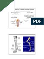 Desmotomia do ligamento acessório proximal1