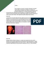 Adaptaciones Celulares AL Estrés