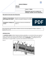 Guía Estructura Membrana 1° medio
