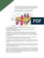 Resumen. Estructura de Membrana Celular