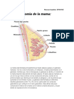 Anatomia de la mama.docx