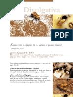 Gorgojo de Los Andes