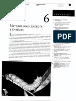 06_Metabolismo