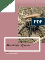 macrothele_calpeiana_tcm30-196945