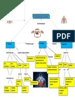 mapa mental sistema circulatorio