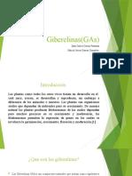 Giberlinas(GAs) agrícola.pptx