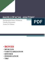 4.maxillofacial anatomy