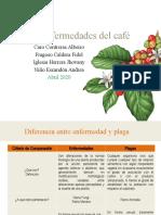 PLAGAS Y ENFERMEDADES EN EL CAFE