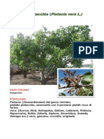 pistacchio(Leonardo Rodolico) .pdf
