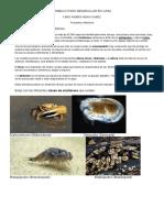 TRABAJO PARA DESAROLLAR pescados y mariscos.docx
