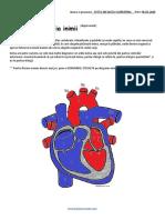 Invatam Anatomia inimii