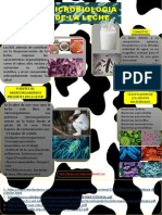 INFOGRAFIA MICROBIOLOGIA