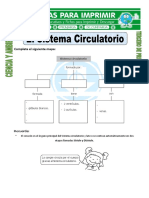 Ficha-de-El-Sistema-Circulatorio-para-Tercero-de-Primaria