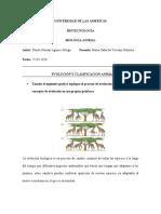 evolución y clasificación animal