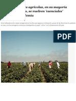 Los trabajadores agrícolas, en su mayoría indocumentados, se vuelven 'esenciales' durante la pandemia