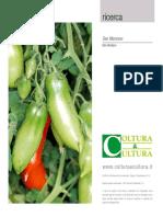 Il pomodoro - La coltivazione dei pomodori San Marzano Coltu