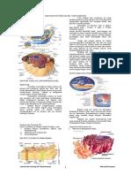 102349828-Anatomi-Dan-Fisiologi-Sel-Tubuh-Manusia.docx