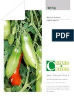 Il pomodoro - L'attività di Nunhems per la coltivazione dei