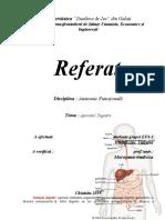 Sistemul Digestiv.doc