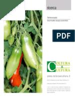Il pomodoro - La partenocarpia nella pianta del pomodoro Col
