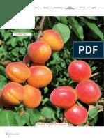 Brosura-Apricot-02Albicocco_GB1.pdf