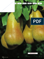 Brosura-Pear-010Pero_GB