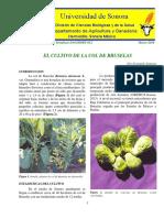 COL DE BRUSELAS.pdf