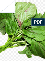 Towards valorizing spinach and amaranth's leaves in Eastern democratic republic of Congo| IJAAR-Vol-15-No-6-p-19-25