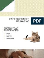 Enfermedades urinarias
