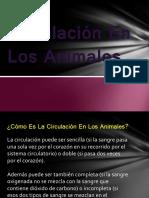 Circulación En Los Animales.pptx