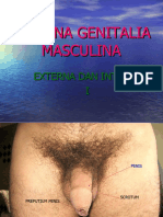PENGANTAR PRAKTIKUM GENITOURINARIUS.ppt