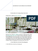 Tips for Growing Onions from Seed.docx