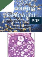 04 Oncología Especial 1 2020 Genital Masculino y Femenino Final