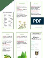 triptico plantas medicinales.doc