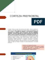 CORTEZA PREFRONTAL FUNCIONES