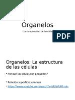 1_Organelos (1)