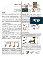 GUIA+TEORIAS+EVOLUTIVAS+Y+PRUEBAS+EV+PRIMERO+2020.pdf