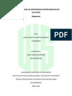 SINTOMATOLOGÍA DE DEFICIENCIAS NUTRICIONALES EN CULTIVO MAGNESIO