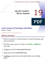 Chapter 19 - Blood Vessels.ppt