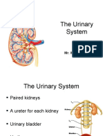 1. The Urinary System final