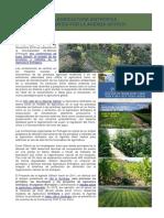 SyntropicFarming-ESP.pdf