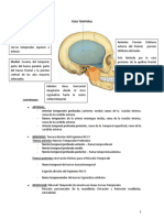 Fosa-Temporal-Cigomatica-y-Pterigomaxilar (3) (4).docx
