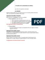 Medios de unión de la articulación Sacroilíaca23